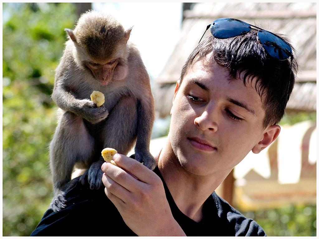 monkey-island-4