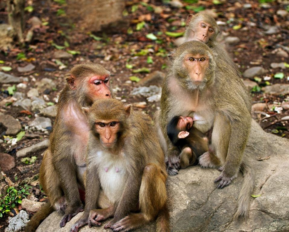 monkey-island-6